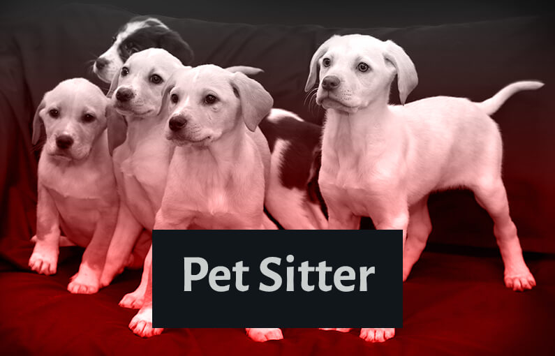 start a canadian pet sitting business